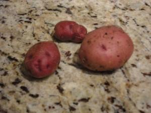 Success Potatoes