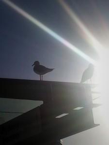 Bird Gangs
