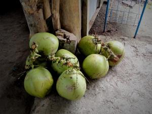Batad Coconuts